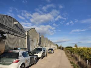 La Policía Local de Cox localiza un invernadero con más de 10.000 plantas de cannabis