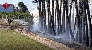 Arde una plantación de palmeras en Almoradí