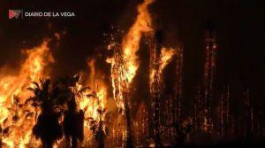 Así fue el espectacular incendio en una plantación de palmeras de Bigastro