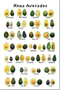 Variedades de aguacate