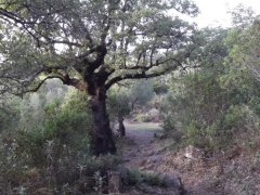 dscf4295 - De Camping en Alcala de los Gazules: Todo un éxito!