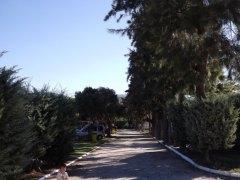 dscf4352 - De Camping en Alcala de los Gazules: Todo un éxito!