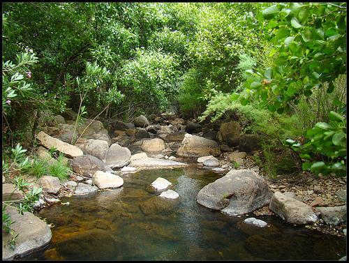 Ruta de los Molines (Camping Los Gazules)