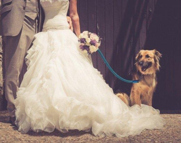 boda vintage con mascotas