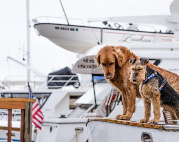 viajar con mascotas - Ideas para Viajar con Mascotas
