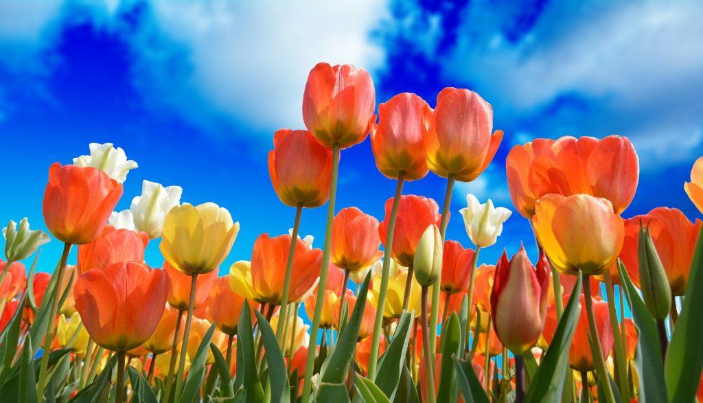 celebrar aniversario de bodas: plantar flores juntos