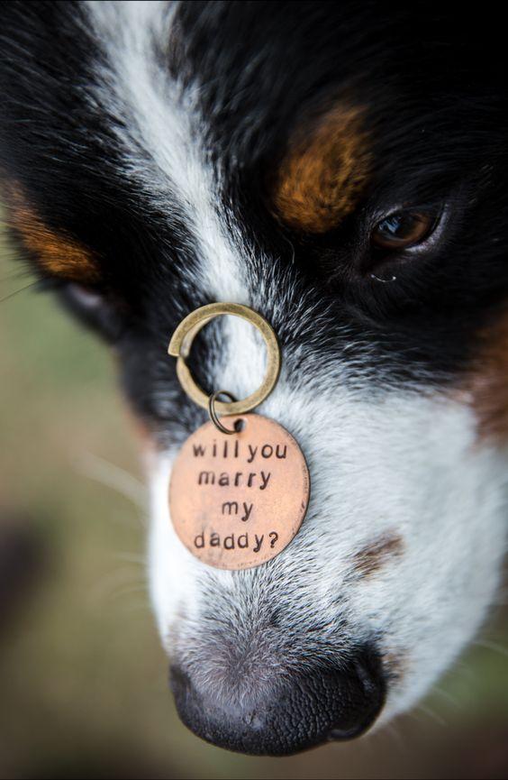 Cómo pedir matrimonio en San Valentín con el perro