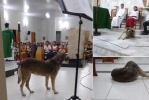 A cadela gosta de ficar na Igreja e já é conhecida na cidade