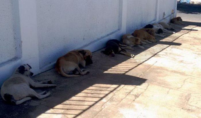 Cães abandonados nas ruas da cidade de Patos (foto: Patos Online)