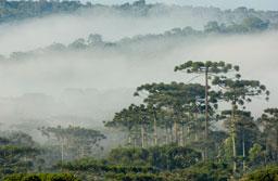 Fundação Boticário destina R$ 1,6 milhão a projetos de proteção do meio ambiente no Brasil