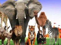 """""""Os Animais Voltaram"""": Circo Spacial faz homenagem aos animais que eram o ponto alto dos espetáculos"""