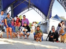 Santo André chega a marca de mil animais adotados na feira de adoção
