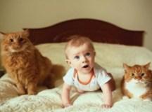 Toxoplasmose é mesmo uma doença causada pelo gato?