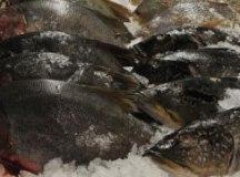 Pescados devem ficar até 2,5% mais caros na Semana Santa, projeta Apas