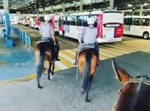 Cavalaria faz ronda no centro de Mauá para evitar furtos