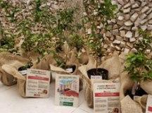 Construtora MBigucci promove Semana de Sustentabilidade