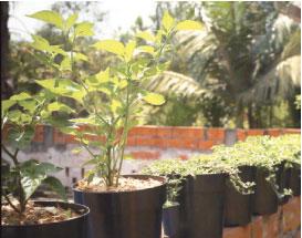 Espaços da cidade foram ocupados para cultivo de verduras e hortaliças. Foto: Divulgação