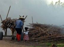 No ano passado, havia 706 mil crianças e adolescentes entre 5 e 17 anos de idade ocupadas nas piores formas de trabalho infantil. Foto: Valter Campanato/Agência Brasil