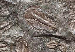 Justiça da França autoriza repatriação de quase mil fósseis da Chapada do Araripe. Foto ilustrativa Public Domain Pictures/Pixabay