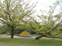 Tema deste ano são as árvores do Parque Central; fotos podem ser enviadas até 28 de agosto. Foto: Helber Aggio/PSA