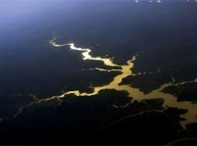 A Amazônia e as florestas de Mata Atlântica respondem por 60% do potencial de descoberta no país. Foto: Valter Campanato/Agência Brasil
