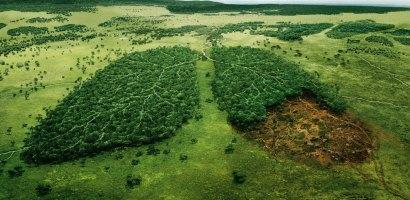 6 medidas para proteger y restaurar los bosques