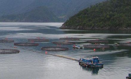 Cerca del 80% del salmón de cría eco-certificado procede de piscifactorías que no cumplen todos los criterios para la certificación