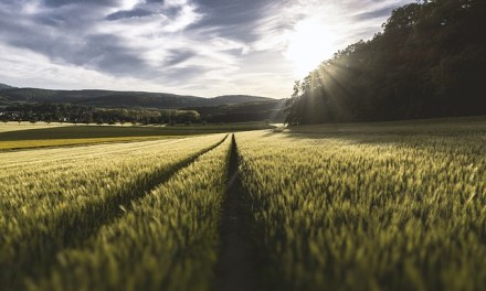Agricultora chilena gana premio de innovación agrícola en París