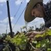 """""""El Comercio Justo y la Agricultura Orgánica son los principales pilares del negocio"""", Jaime Valderrama, Gerente General @MiguelTorresCL"""