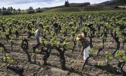 """""""Cuanto más cuidamos la tierra, mejor vino conseguimos"""". Por Rodrigo Constandil @RConstandil de @MiguelTorresCL"""
