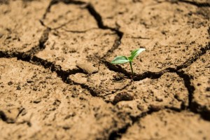 agricultura-sustentable-planta copia