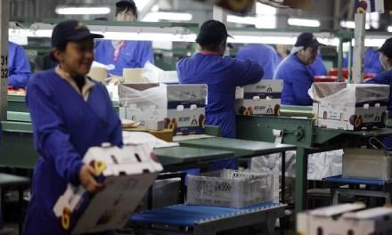 Programa apunta a aumentar la baja participación mundial de Chile en la industria alimenticia