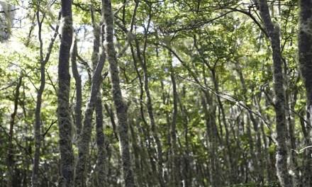 Parador Russfin: el secreto mejor guardado de Tierra del Fuego