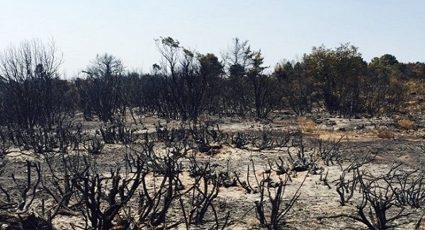 Ministerio del Medio Ambiente convoca a comisión de expertos para la restauración ecológica de patrimonio natural afectado por incendios