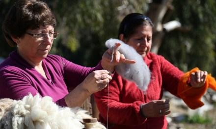 Artesanas de la sexta región buscan rescatar la lana merino, una de las fibras más finas y antiguas del mundo