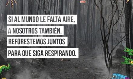 Lollapalooza Chile y la Agencia de Sustentabilidad y Cambio Climático se unen para reforestar 10.500 árboles nativos