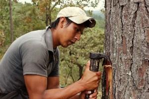 Una mirada hacia las comunidades sostenibles, cinco iniciativas del sector privado destacadas en Colombia, México y Brasil