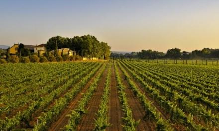 Familia Torres elegida como la marca de vinos más admirada del mundo