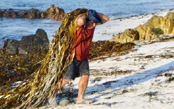 Pesca Artesanal exige políticas de fomento en «Mes del Mar»