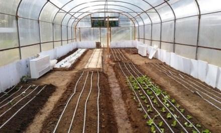 Emprendimiento de la U. de Chile participa en construcción de premiado invernadero en Patagonia chilena