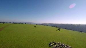 Tinajacura: el criadero de pollos de libre pastoreo