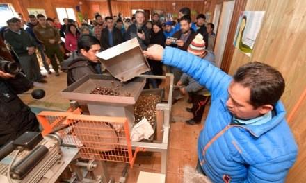 Comunidad Pehuenche administrará planta comunitaria de procesamiento de avellanas en Chile