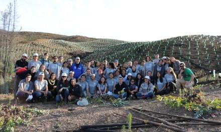 Voluntarios de todo el país plantan árboles nativos en zonas afectadas por incendios junto a Fundación Reforestemos y WOM en la región del Maule