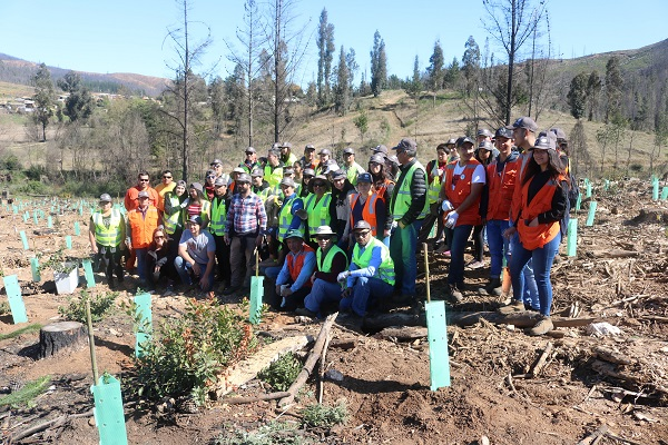 Fundación Reforestemos junto a Arauco inician proyecto de reforestación en Cerro La Carmiña de Santa Olga