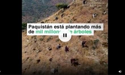 Pakistán quiere plantar 10 mil millones de árboles