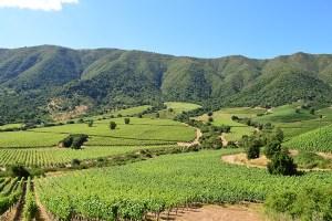 Iniciativa chilena es premiada en Inglaterra por promoverla conservación de la naturaleza en viñas