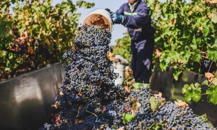VSPT Wine Group busca producir vinos con 100% energías renovables al 2021