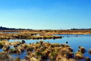 Realizan taller sobre protección de humedales con tecnologías libres en Valdivia