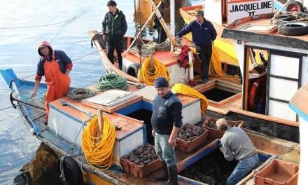 Proyecto de Fundación Chinquihue busca que pescadores artesanales de Maullín exporten locos a México