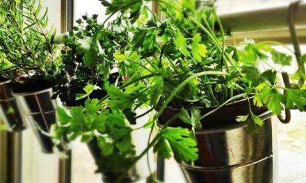 ¿Puede la ciudad convertirse en un lugar de cultivo?